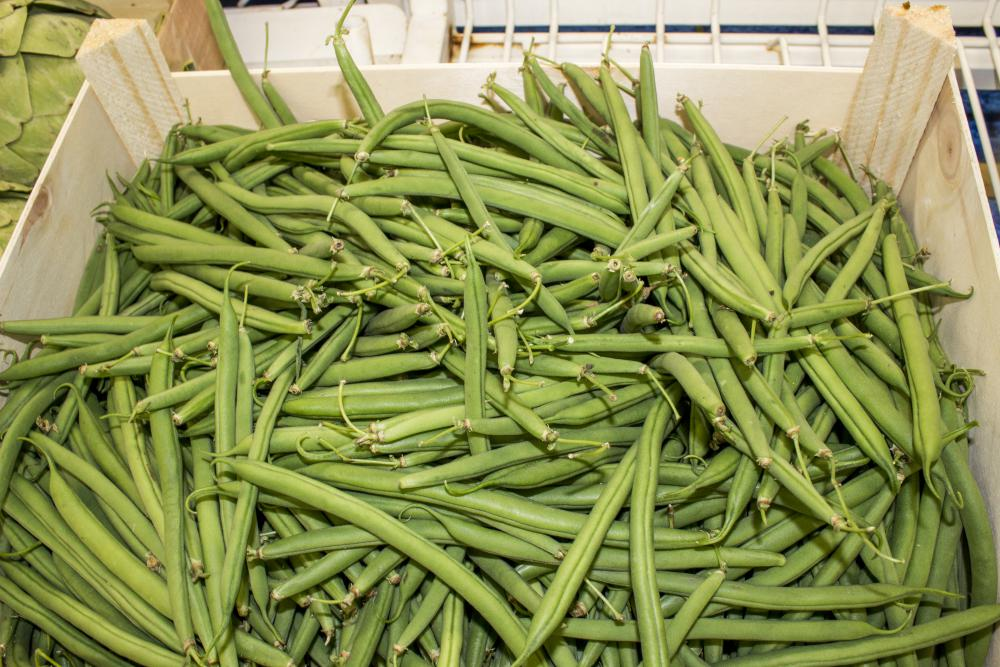Nos haricots verts