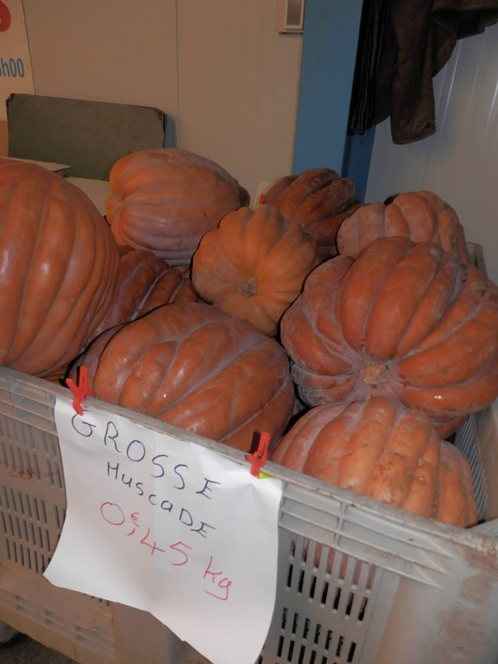 Courge Muscade en promotion