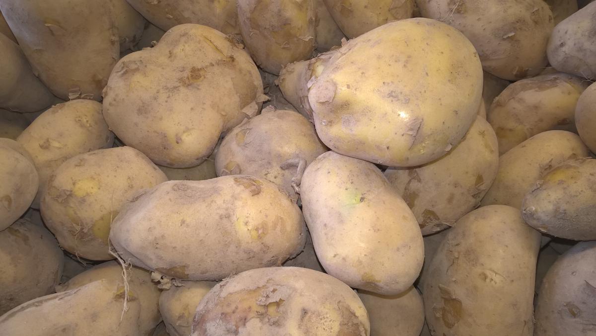 Pommes de terre Marabelle